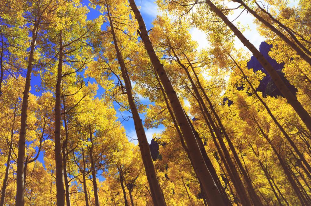 Rocky-Mountains-farebne-stromy-zlte-tura-colorado